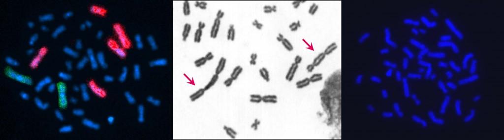 conoscereinostricromosomi