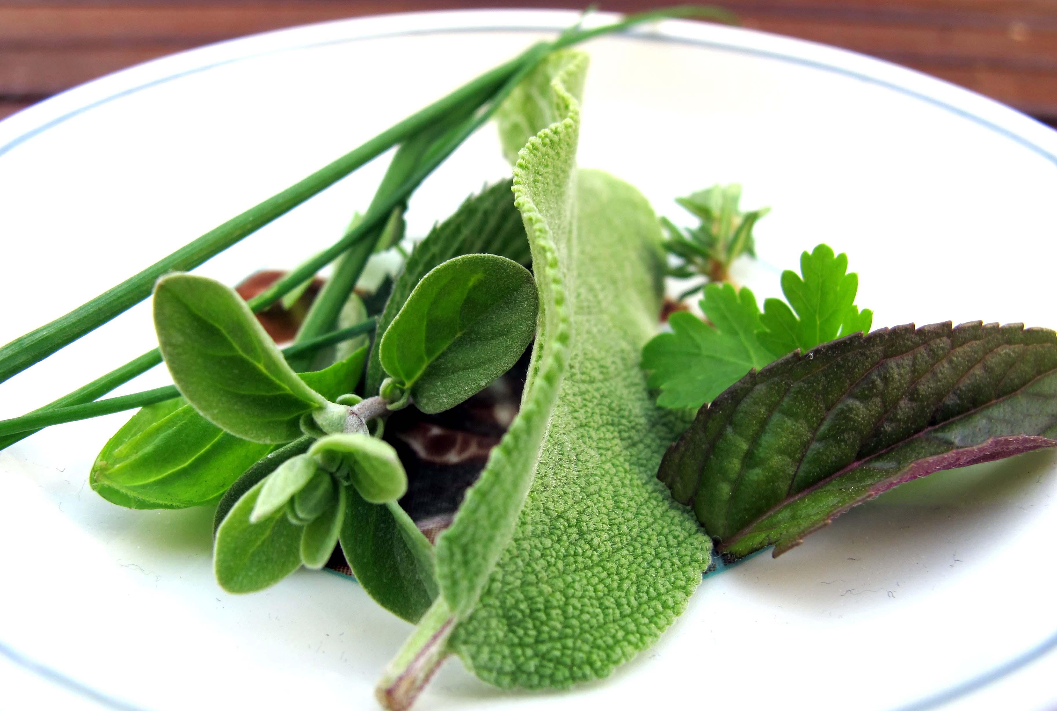 Le ricette con le erbe aromatiche le nostre erbe for In cucina ricette