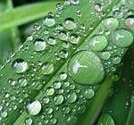 raindrops_on_grass_1024x768[1]--180x140