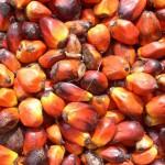 Palm_oil_production_in_Jukwa_Village,_Ghana-04-kqRC-U1080207244633WaC-1024x576@LaStampa.it
