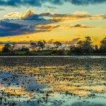 Pantanal_622by415px