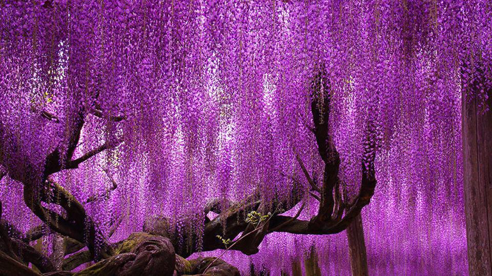 amazing-trees-1-2_0